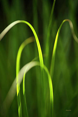 Photograph - Green Grass by Christina Rollo