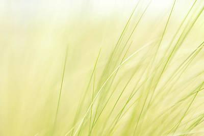 Green Grass In The Breeze Art Print