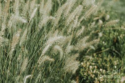 Photograph - Green Grass by Iris Greenwell