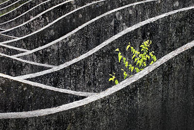 Concrete Photograph - Green - Gray by Robert Semnic