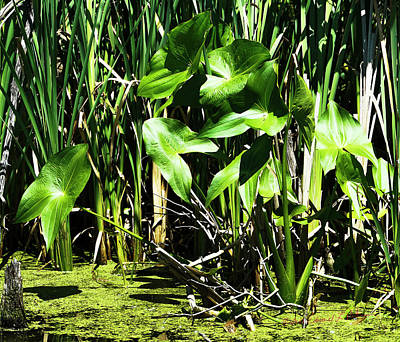 Photograph - Green Green by Edward Peterson