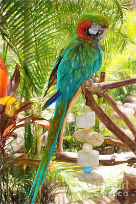 Photograph - Great Green Headed Macaw by Sue Melvin