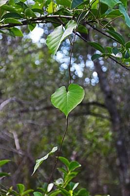 Photograph - Green Heart by Michiale Schneider
