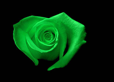 Green Heart-shaped Rose Print by Glennis Siverson