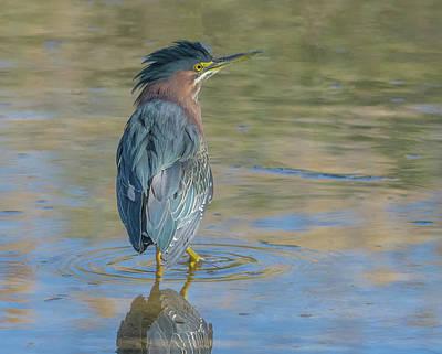 Photograph - Green Heron 9278-022118-1 by Tam Ryan