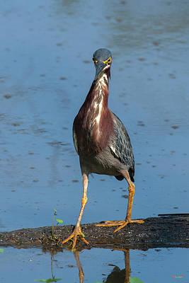 Photograph - Green Heron Dmsb0085 by Gerry Gantt