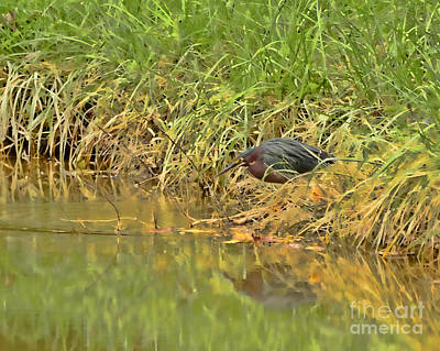 Pond Photograph - Green Heron  by Kerri Farley