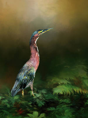 Photograph - Green Heron by Phyllis Taylor
