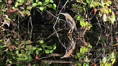 Photograph - Green Heron Reflections by Erick Schmidt