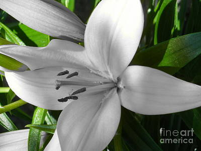 Green Highlighted Lily Art Print