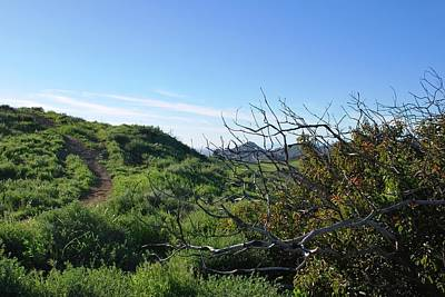 Photograph - Green Hills And Bushes Landscape by Matt Harang