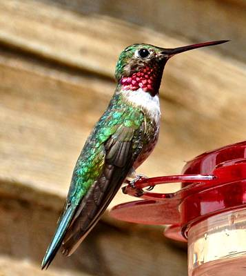 Clouds Rights Managed Images - Green Hummingbird Royalty-Free Image by Amy McDaniel