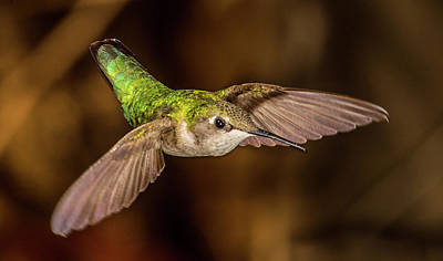 Photograph - Green Hummingbird by Paul Freidlund