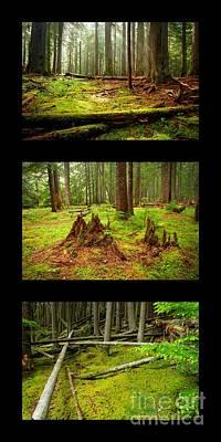 Photograph - Green by Idaho Scenic Images Linda Lantzy