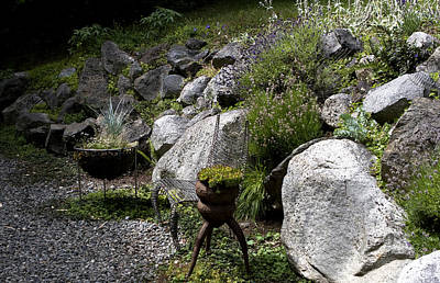 Photograph - Green In Rock Garden by Lorraine Devon Wilke