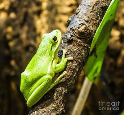 Photograph - Green Jumper by Steven Parker