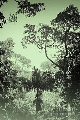 Photograph - Green Jungle by Rudi Prott
