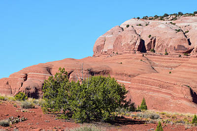 Photograph - Green Juniper Red Sandstone Royal Blue Sky by Tom Cochran