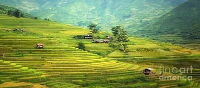 Cambodia Photograph - Green Land by Thomas Jones