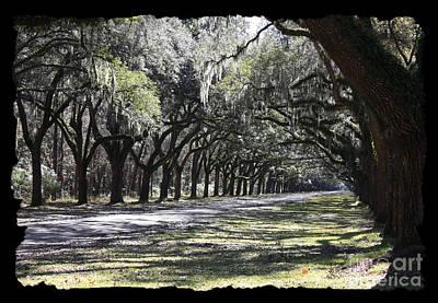 Green Lane With Live Oaks - Black Framing Art Print by Carol Groenen