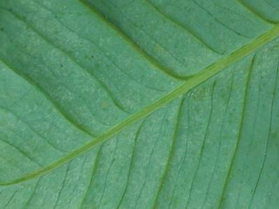 Photograph - Green Leaf 1 by Jennifer Bright
