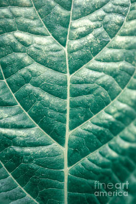 Photograph - Green Leaf Background by Anna Om
