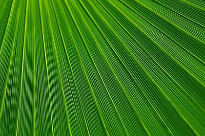 Photograph - Green Leaf Background by Tilen Hrovatic