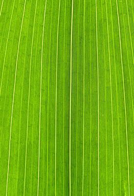Royalty-Free and Rights-Managed Images - Green Leaf by Frank Tschakert