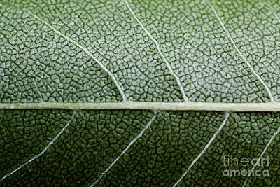 Green Leaf Geometry Art Print