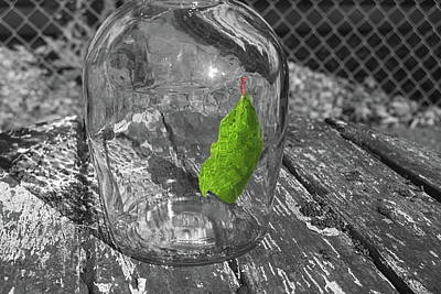 Photograph - Green Leaf In A Bottle by John Rossman
