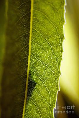 Green Leaf Lines Art Print