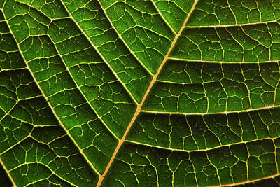 Photograph - Green Leaf Macro by Morgan Wright