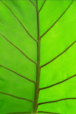 Green Leaf Art Print by Marcus Adkins