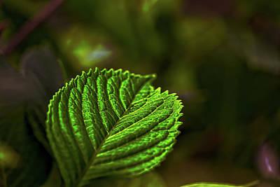 Photograph - Green Leaf by Richard Gregurich