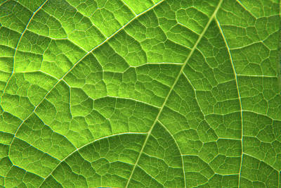 Photograph - Green Leaf Structure by Aidan Moran