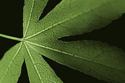 Photograph - Green Leaf Veins by Jennie Marie Schell