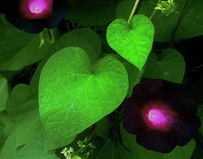 Photograph - Green Leaf Violet Glow by Roger Bester