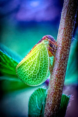Photograph - Green Leafhopper by Lilia D