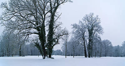 Photograph - Green-leaved Trees In Winter by Sun Travels