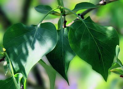 Photograph - Green Leaves 2 by Johanna Hurmerinta