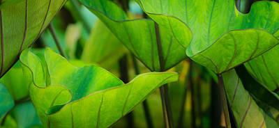 Photograph - Green Leaves At Cantigny by Joni Eskridge