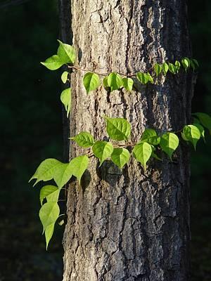 Green Leaves At Walden Pond Art Print by Christina Solstad