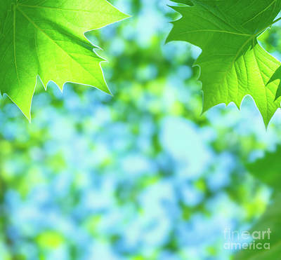 Photograph - Green Leaves Background by Anna Om