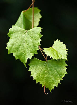 Photograph - Green Leaves by Christopher Holmes