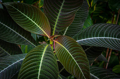 Photograph - Green Leaves by Harry Spitz