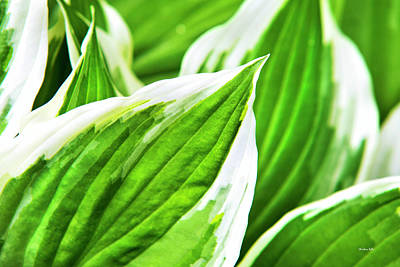 Photograph - Green Leaves Nature Abstract by Christina Rollo