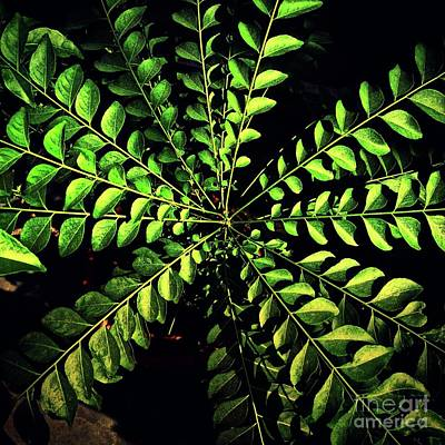 Green Leaves  Original