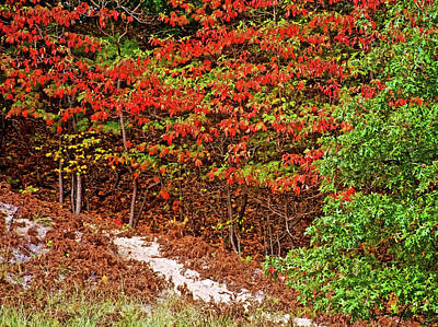 Photograph - Green Leaves Turning Red Along Sandy Trail To North Beach Park In Ottawa County, Michigan  by Ruth Hager