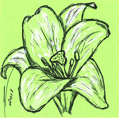 Lilies Drawings - Green Lily by Nicole Porter