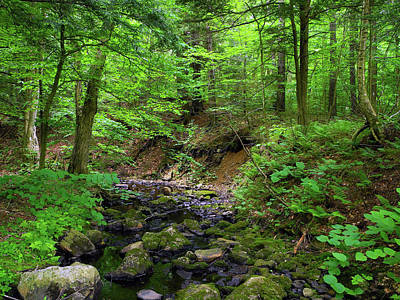 Photograph - Green Lined Creek by Raymond Salani III